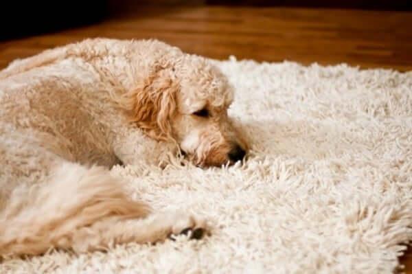 dubinsko čišćenje tepiha